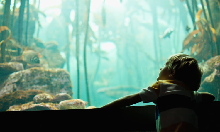 A curious child watches fish swim by in an aquarium tank