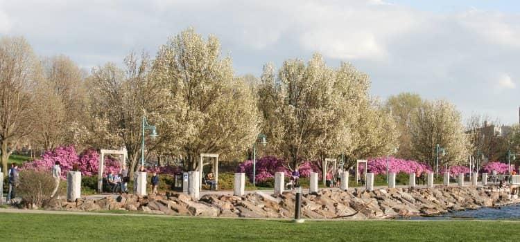 Views of flowers blooming in a Burlington park