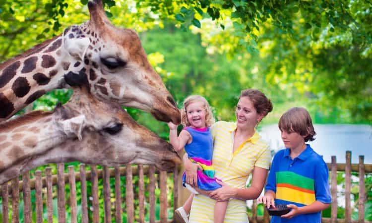 A family feeding a giraffe at a zoo