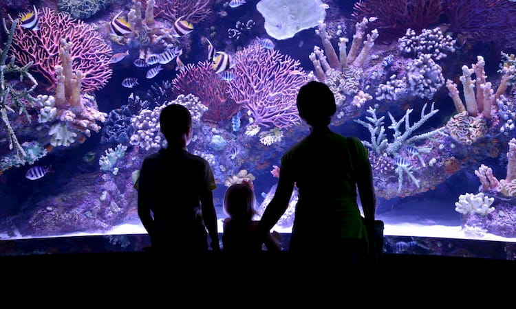 Three people silhouetted in the glow of a large aquarium tank