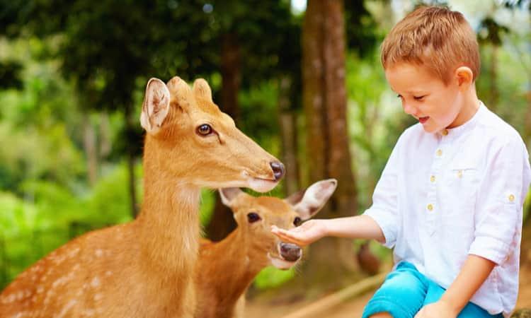 A child feeding animals at a zoo field trip
