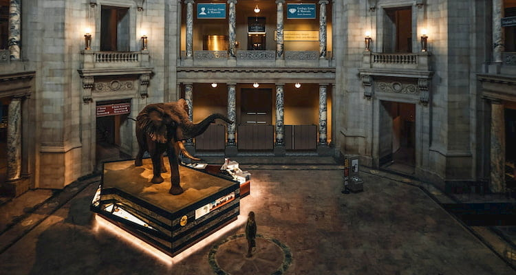 a lone person stands in the Smithsonian Museum of Natural History, a taxedermy elephant looming over them