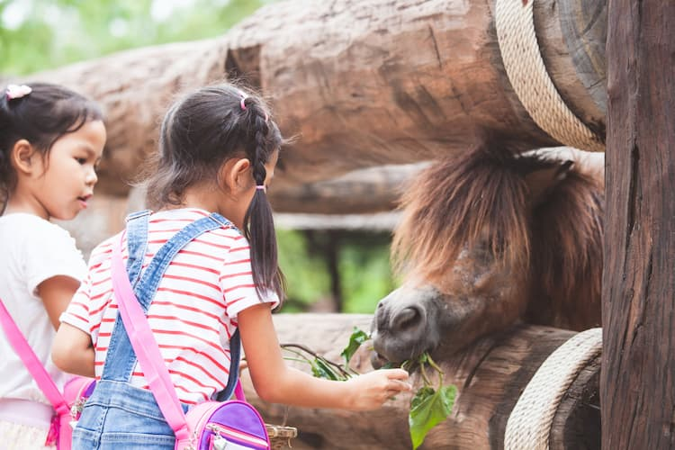 Two little girls with miniature horse at petting zoo