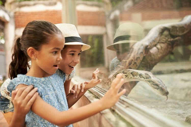 kids look at a snake at the zoo