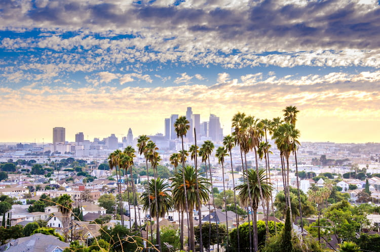 Los Angeles downtown cityscape and palm trees at sunset