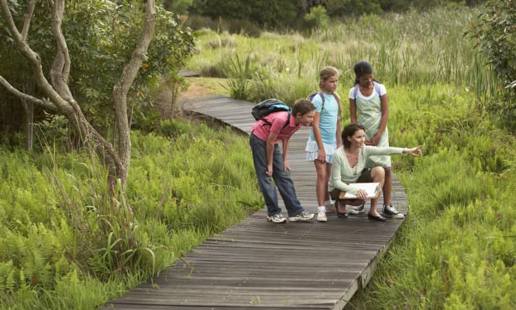 A teacher and a group of students observe wildlife on a marshy boardwalk