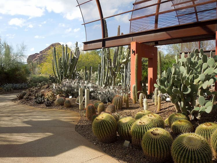 the exterior of the entrance to the phoenix botanical garden, surrounded by cacti