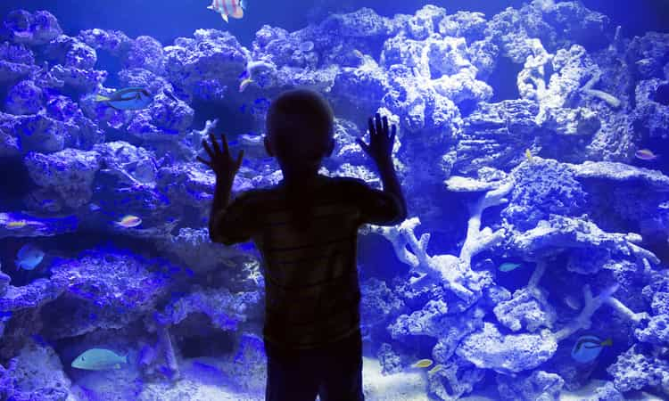 A child standing in front of an aquarium window