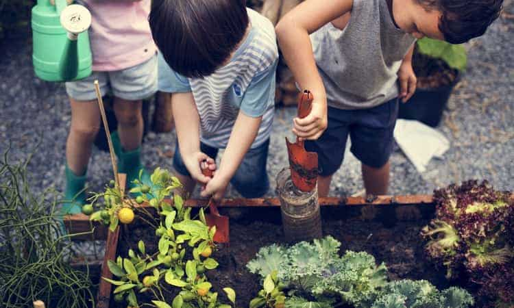 A group of children gardening during a field trip